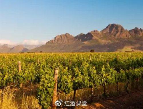 南非,一个被遗忘的新世界葡萄酒产区